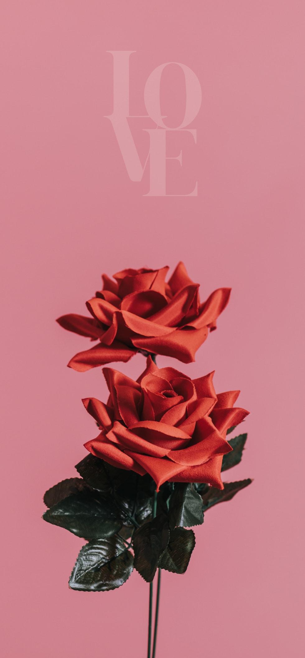 Juni-Wallpaper-2021-design-bildschirmhintergrund-phone-rose